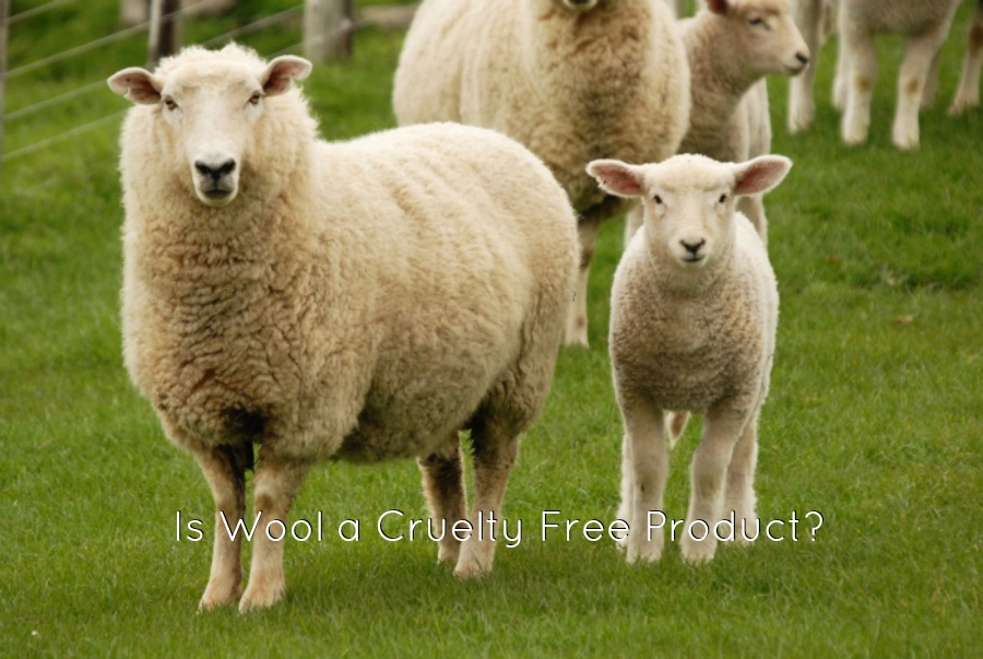 Is Wool a Cruelty Free Product?