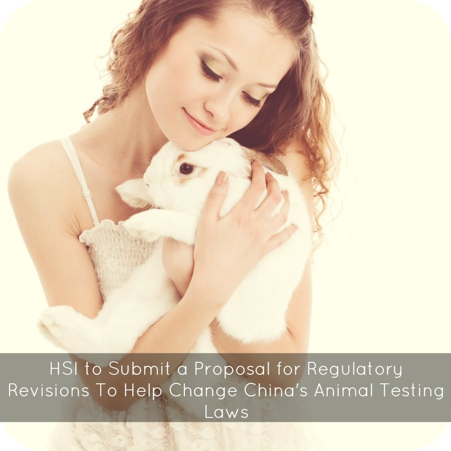 HSI to Submit a Proposal for Regulatory Revisions To Help Change China's Animal Testing Laws