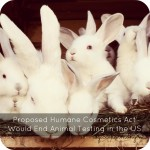 Proposed Humane Cosmetics Act Would End Animal Testing in the US
