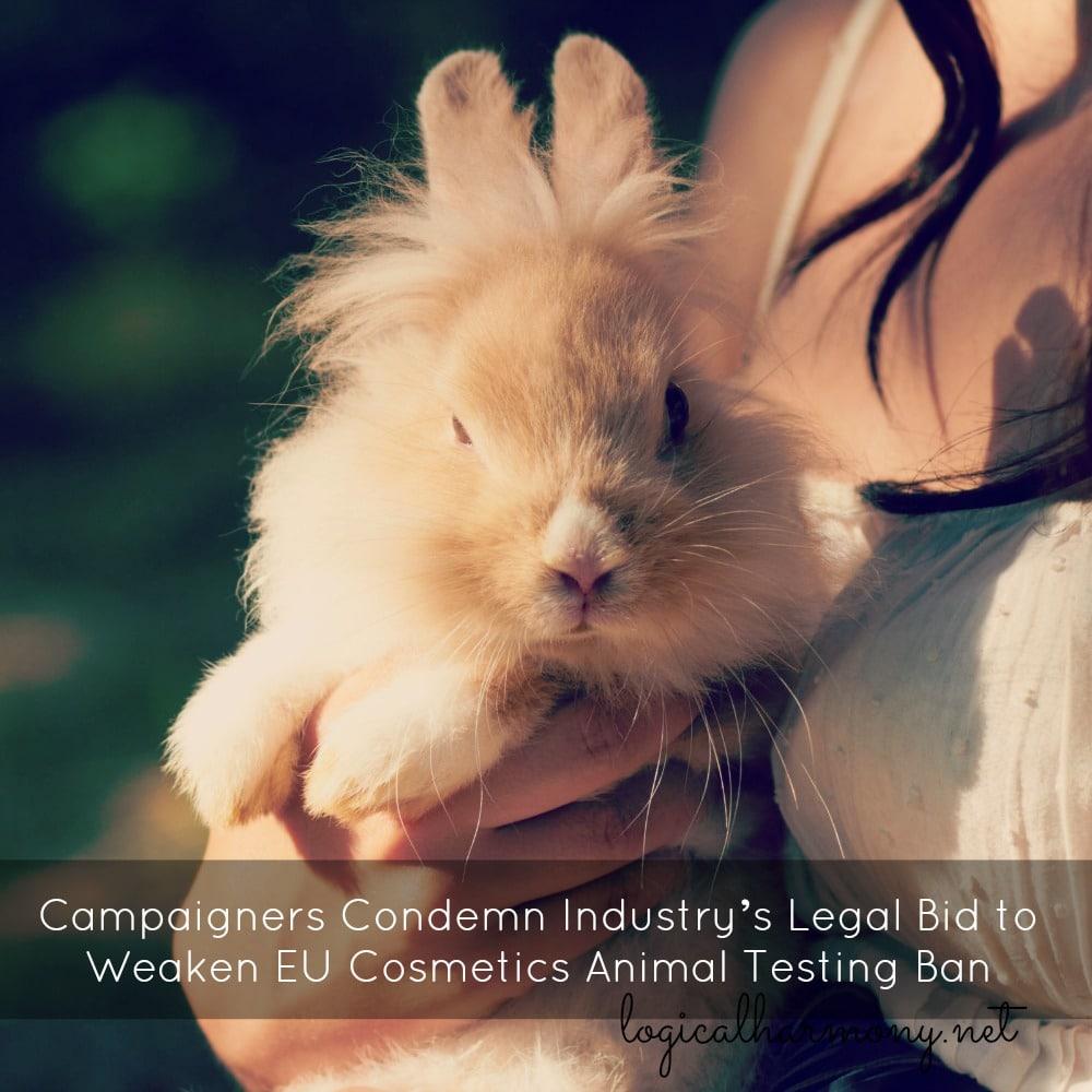 Campaigners Condemn Industry's Legal Bid to Weaken EU Cosmetics Animal Testing Ban